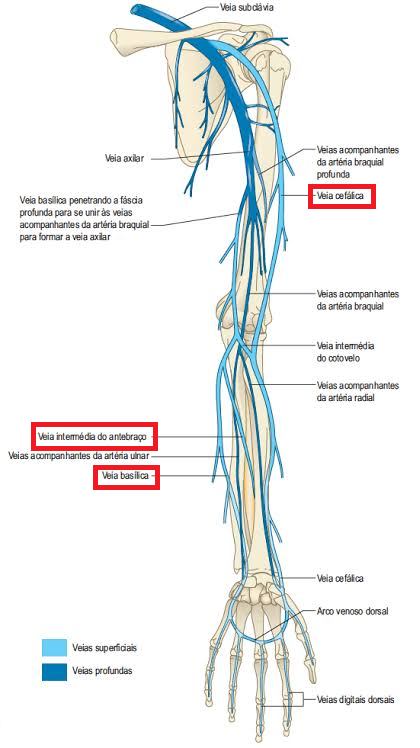 Sistema venoso membro superior marcado