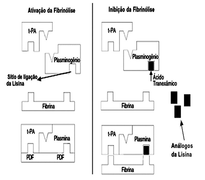inibição_fibrinólise